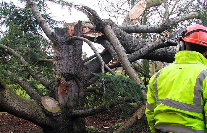 Domestic garden maintenance - tree removal